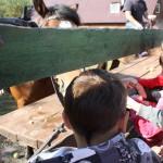 Яблоки и морковку мы принесли с собой. На ферме нам рассказали, что это лакомство для животных. А вот хлебом их кормить нельзя.